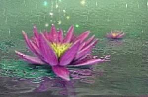 lilyw